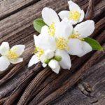 Vanille : un parfum d'orchidée