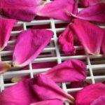 Comment faire sécher des pétales de fleurs ?