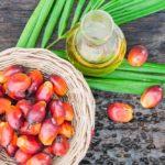 Qu'est-ce que l'huile de palme ?